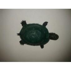 Toptan Şaka Kaplumbağa Kaucuk