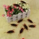 Toptan Hamam Böceği